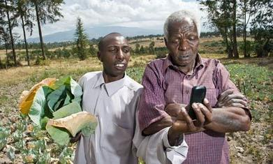 Cassava on eBay? M-Farm SMS helps Kenya's farmers get better prices - The Guardian   PeopleWorks-HRM Solution Providers   Scoop.it
