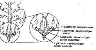 Bloqueos regionales en pediatría - Bloqueo caudal - | ANESTESIOLOGIA | Scoop.it