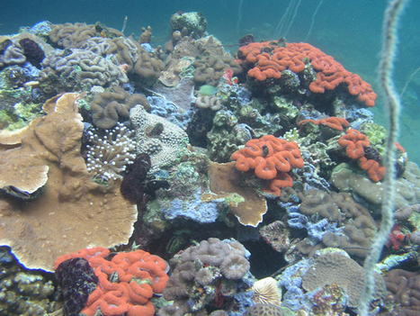 Unusual Coral Reef Thrives in Acidified Waters | GarryRogers NatCon News | Scoop.it