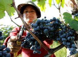 Quando o vinho ideal se faz com ajuda de satélites - TVNET.PT | Geoprocessing | Scoop.it