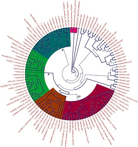 Laccase multigene families in Agaricomycetes | MycorWeb Plant-Microbe Interactions | Scoop.it