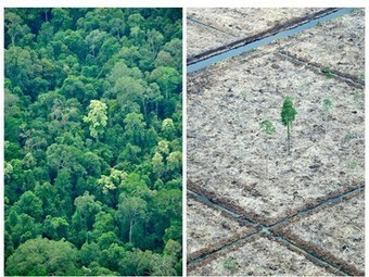 Fewer trees means less rain, decreased hydropower | Bio { Cultural } Diversity | Scoop.it