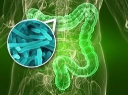 Mi obesidad, mi diabetes ¿Mis microbios? - Mirador Salud | Salud Publica | Scoop.it