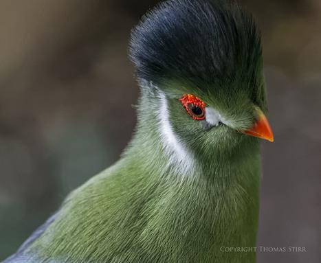 A quick visit to Bird Kingdom - Thomas Stirr Photography | Mirrorless Cameras | Scoop.it