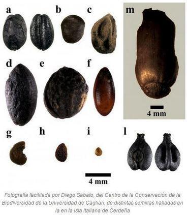 Hallan semillas de melón mediterráneo de hace más de 3.000 años | Enseñar Geografía e Historia en Secundaria | Scoop.it