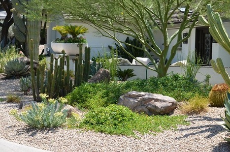 Creating a Lush Desert Oasis in the Urban Landscape | Green Living | CALS in the News | Scoop.it