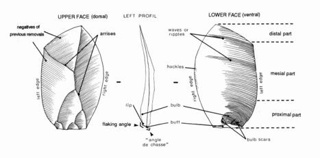 (MULTI) (PDF) - Technology & Terminology of Knapped Stone | Cercle de Recherches et d'Etudes Préhistoriques | Glossarissimo! | Scoop.it