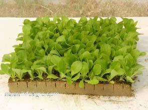 Desarrollo sostenible ante el cambio climático | Agricultura Urbana | Scoop.it