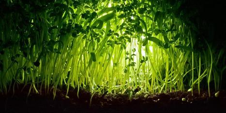 Plants talk to each other using an internet of fungus | temporary | Scoop.it