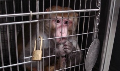 China Southern Airlines Fined For Monkey Business | Animals R Us | Scoop.it