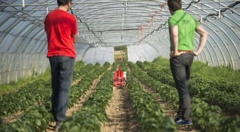 Appel à projets Ecophyto : des projets innovants et efficients pour une mise en œuvre de certaines actions du Plan | Chimie verte et agroécologie | Scoop.it
