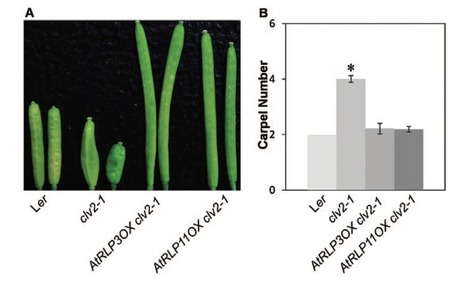 Journal of Experimental Botany (2016): Transcriptional regulation of receptor-like protein genes by environmental stresses and hormones and their overexpression activities in Arabidopsis thaliana | WU_Phyto-Publications | Scoop.it