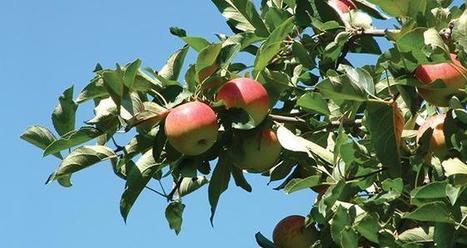 La bonne conduite du verger pour une bonne récolte | Arboriculture: quoi de neuf? | Scoop.it