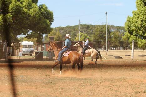 HORSE TRAINER | Quest 2 | Scoop.it