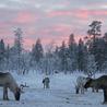 Finland: a social inspiration