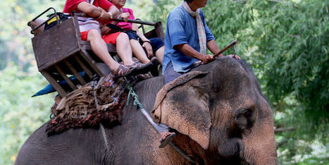 Maltraitance animale : les dix attractions touristiques les plus cruelles | Nature Animals humankind | Scoop.it