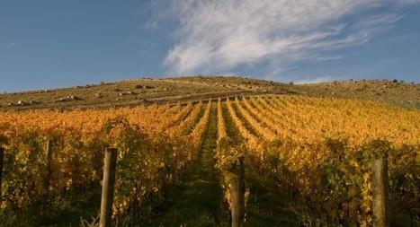 Quartz Reef Wines - Central Otago, New Zealand - Quartz Reef Wines | Pinot Post | Scoop.it