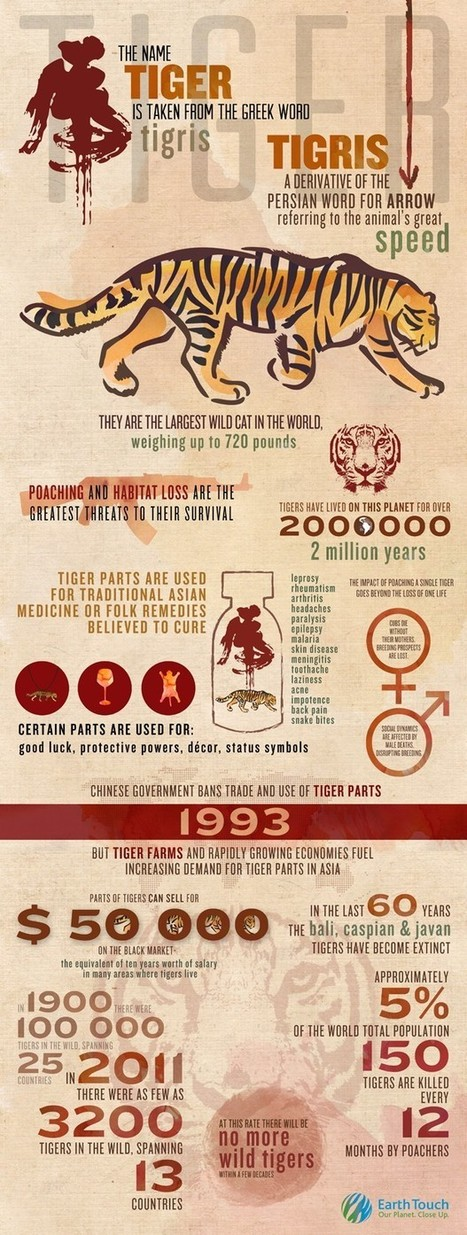 INFOGRAPHIC: International Tiger Day   Earth Touch Web TV   Tiger Conservation   Scoop.it