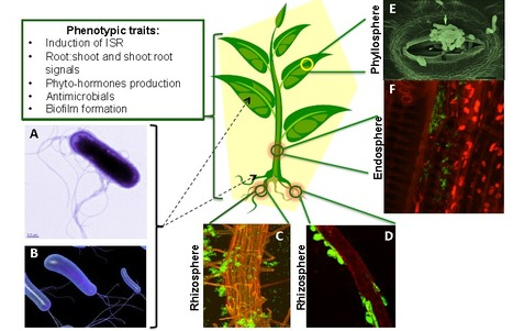 Functional soil microbiome: Belowground solutions to an aboveground problem | MycorWeb Plant-Microbe Interactions | Scoop.it