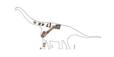 Meer dan vijftien meter lange dinosaurus ontdekt in China - Scientias.nl | KAP-VanRoyBrian | Scoop.it