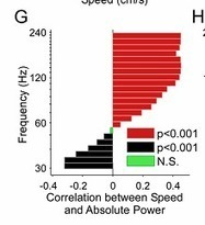 When you run fast, your brain runs faster   Social Foraging   Scoop.it