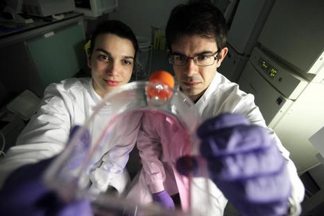 Mitochondrias y envejecer | Novedades Cientificas y Médicas | Scoop.it