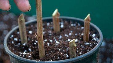 RHS advice on gardening / RHS Gardening | Edible Garden | Scoop.it