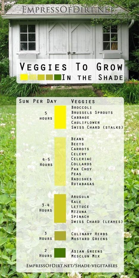 Vegetables You Can Grow In The Shade - Empress of Dirt | Balcony Gardening | Scoop.it
