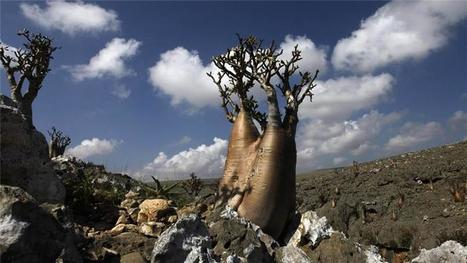 Russian roots and Yemen's Socotra language | European Peoples and Cultures | Scoop.it