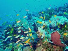 Lancement de la Plateforme Océan et Climat 2015 | Environnement et développement durable, mode de vie soutenable | Scoop.it