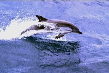 #SeaShepherd #UK offers £2,000 reward for capture of #dolphin #killer ~ Any info.Contact below.. more info... | Rescue our Ocean's & it's species from Man's Pollution! | Scoop.it