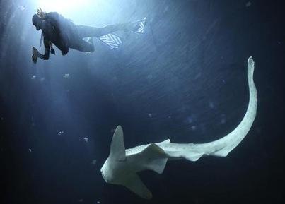 Musée océanographique de Monaco: des artistes chinois veulent réconcilier hommes et requins | La-Croix.com | Requins | Scoop.it