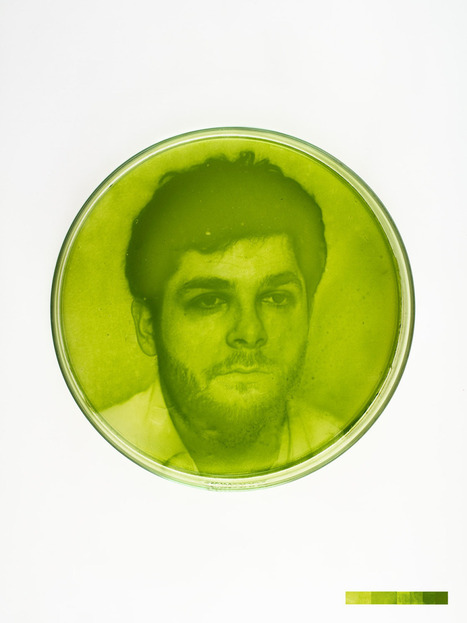 Photographs Rendered in Living Algae   Strange days indeed...   Scoop.it