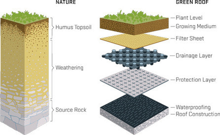 Green Roof Layers Mimic Natural Soil | Eco Brooklyn | Vertical Farm - Food Factory | Scoop.it