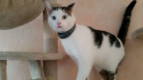 Smart collar for cats: Interview with the start-up KADDZ | Quantified Pet | Scoop.it