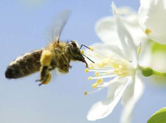 Científicos descubren que hay comunicación entre abejas y flores ...   Fraudesssss   Scoop.it