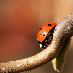 20 Inspirational Macro Photos (March 2012) | raw exposure photography | Fashion Models Photography | Scoop.it