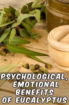 Psychological, Emotional Benefits of Eucalyptus Essential Oil | Natural Health & Healing | Scoop.it