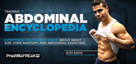 Bodybuilding.com - Abdominal Encyclopedia: Core Anatomy And Effective Training | My English page - Jordy Hamelers | Scoop.it