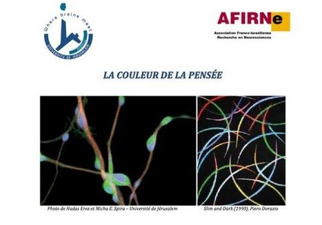 Une exposition d'images du cerveau, à Deauville « Côté Caen | Créativité & Cerveau pour l'innovation | Scoop.it