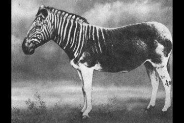 «On risque de faire disparaître en deuxsiècles autant d'espèces qu'en unmillion d'années» | Faire Territoire | Scoop.it