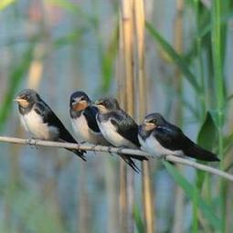 George Herald | Bird identification course | Conservation | Scoop.it