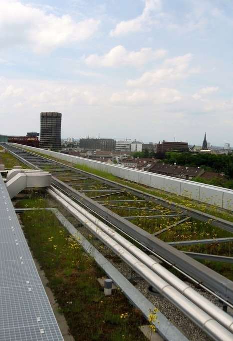 Top 5 Green Roofs from Switzerland Tour | GreenRoofs | Scoop.it