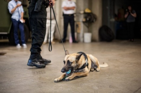Police Dogs: K-9 Officers and How They Serve | NuVet Labs Reviews | Scoop.it
