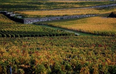 Bordeaux: A la place des pesticides, une algue bientôt pulvérisée sur les vignes? | Insolite DD | Scoop.it