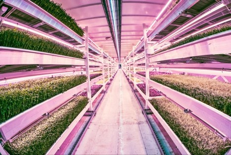 Farming News - London s underground farm prepares to open | Vertical Farm - Food Factory | Scoop.it