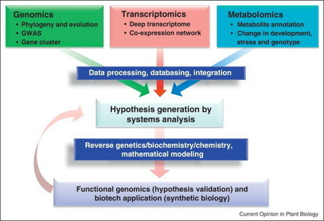 Phytochemical genomics—a new trend | Erba Volant - Applied Plant Science | Scoop.it