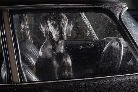 #Photographie : Le silence des chiens dans les voitures | Photographie | Scoop.it