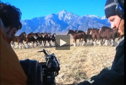 Journey to the Super Bowl.  The Budweiser Clydesdales in Training! | Horse and Rider Awareness | Scoop.it