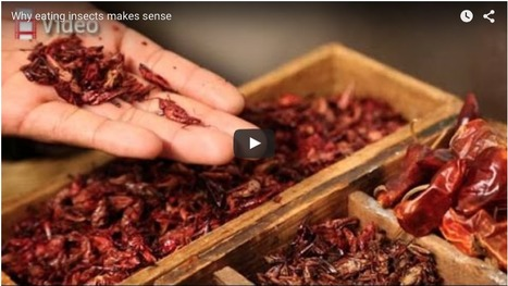 Economist serves up insect crepes in campaign to tackle world hunger | Entomophagy: Edible Insects and the Future of Food | Scoop.it